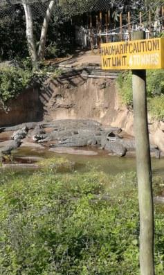 Eines der Bilder unserer Safari-Tour